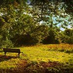 bench-3745000_640