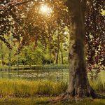 deciduous-tree-5331975_640